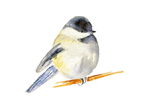 chubby chickadee watercolor clipart painting chickadee print rh etsy com chickadee clipart black and white Cartoon Chickadee