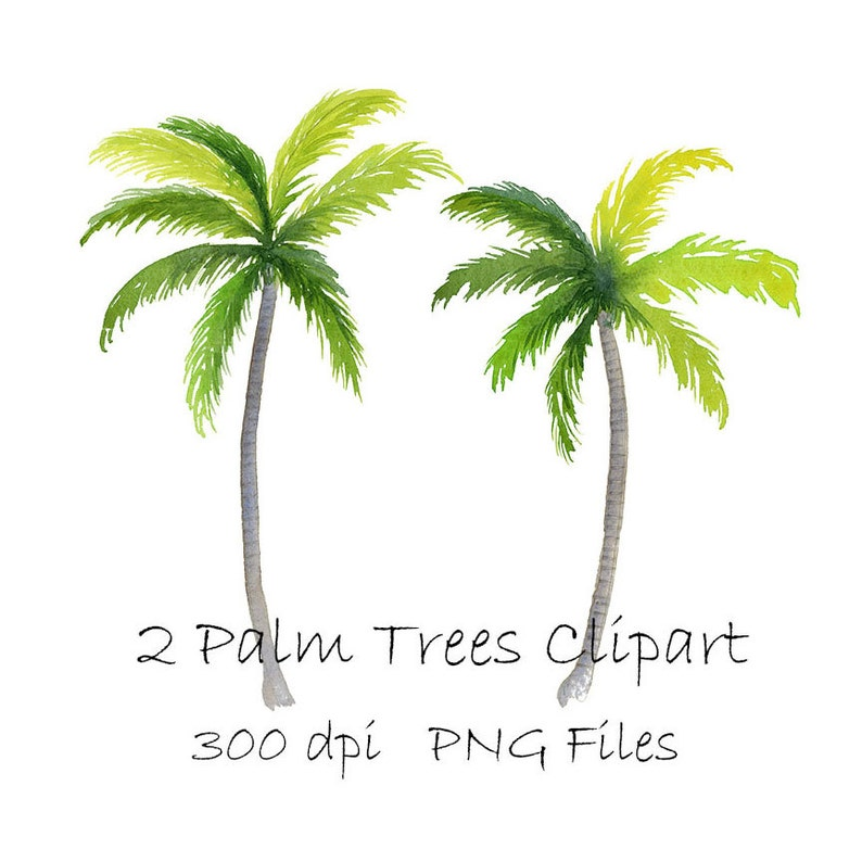 Watercolor Palm Tree Clipart Tropical Png Instant Download Etsy