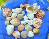Seashells, variety from Sanibel Captiva Islands includes scallops, jingle shells, jewel box, cockle, kitten paw, slipper Florida souvenir V3