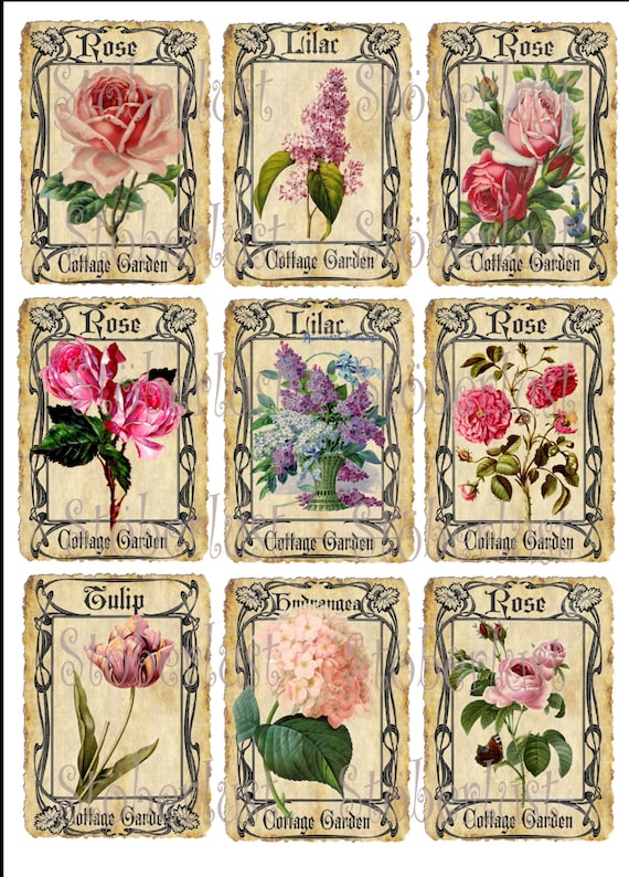 9 X Atc Card Cottage Garden Roses Hydrangea And Lilac In Etsy