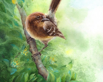 "Hawaiian  'Elepaio bird watercolor 11"" X 14"" print"