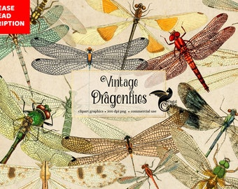 Vintage Dragonflies, vintage dragonfly clipart, antique illustrations, scientific illustrations, PNG graphics, scrapbook embellishments