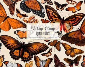 Vintage Orange Butterflies, vintage butterfly clipart, antique scientific illustrations, PNG graphics, scrapbook embellishments