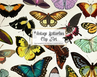 60 Vintage Butterflies Clipart - antique digital butterfly illustrations in png clip art format instant download for commercial use