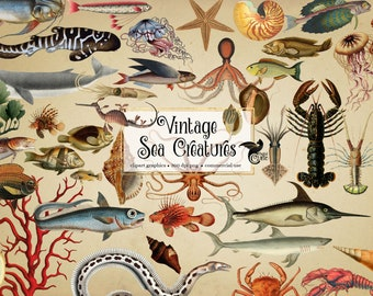 Vintage Sea Creatures Clipart - antique illustrations of fish and nautical marine life in png format instant download for commercial use