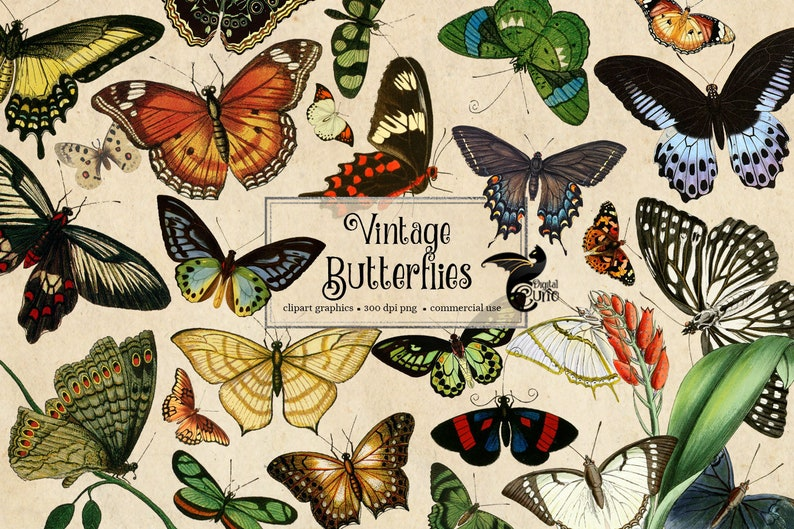 200 Vintage Butterflies, vintage butterfly clipart, antique illustrations, scientific illustrations, PNG graphics, scrapbook embellishments photo