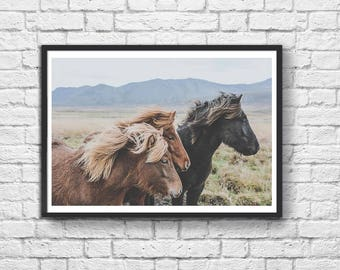 Art-Poster 50 x 70 cm - Iceland Savage Horses