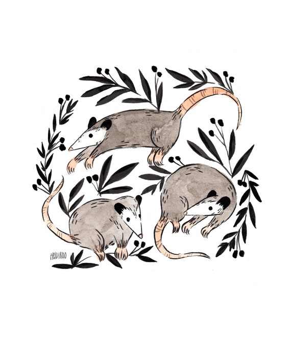 Opossum Kunstdruck Süße Beutelratten Drucken Kunstdruck Etsy