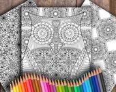 Owl Three-Page Digital Co...