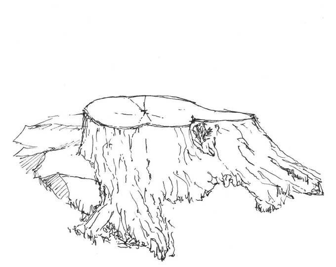 TREE STUMP - Nature, Woods, Forest, Logging, Woodworking, Pen and Ink, Drawing, Sketchbook, Art, Print, Drawn There