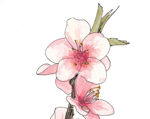 PEACH BLOSSOM FLOWERS - Flower, Tree, Bloom, Pink, Nature, Spring, Floral, Ink and Watercolor, Painting, Drawing, Sketchbook, Drawn There