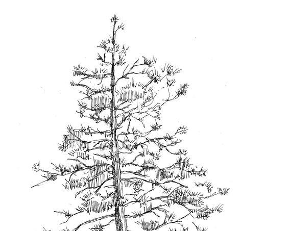 PINE TREE & ROCKS - Big Bear Lake, California, Sketch, Nature, Plein Air, Drawing, Pen and Ink, Sketchbook, Art, Print, Drawn There