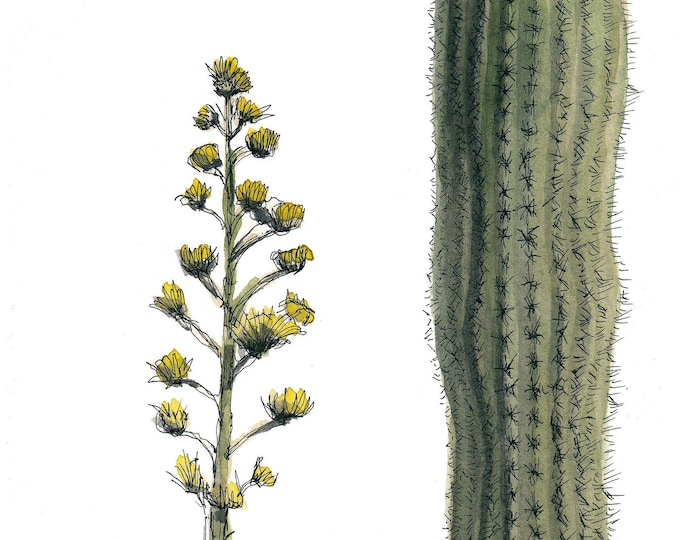 AGAVE AND CACTUS - Desert Plants, Nature, Flowers, Ink and Watercolor Plein Air Painting, Drawing, Sketchbook Art, Giclee Print, Drawn There