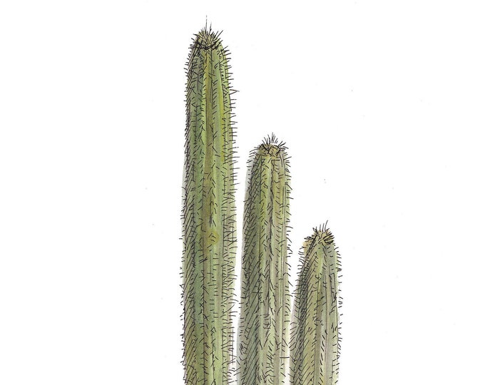 POTTED CACTUS - Ink and Watercolor, Drawing, Painting, Sketchbook, Art Print, Desert Life, Plants, Drawn There