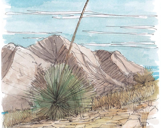 YUCCA PLANT - El Paso, Texas, Desert Landscape, Drawing, Painting, Pen and Ink, Watercolor, Sketchbook, Mountains, Art, Drawn There