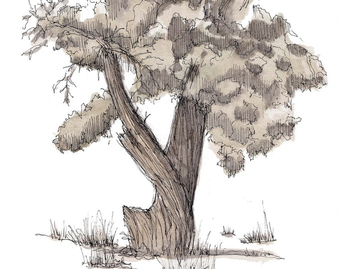 JUNIPER TREE TWISTED - Vortex, Utah, Snow, Desert Life, Nature, Art, Watercolor, Painting, Pen and Ink, Drawing, Sketchbook, Drawn There