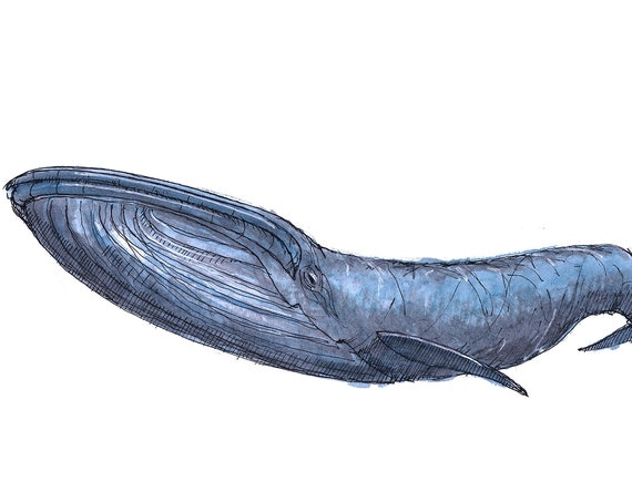 BLUE WHALE - Ethyl, Sea Life, Ocean, Recycled Plastic, Santa Fe, Meow Wolf, Art, Drawing, Painting, Sketchbook, Art, Print, Drawn There
