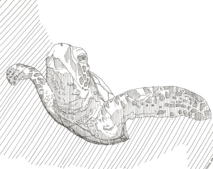SEA TURTLE SKETCH - Marine Life, Ocean, Nature, Animal, Art, Watercolor, Painting, Pen and Ink, Drawing, Sketchbook, Drawn There