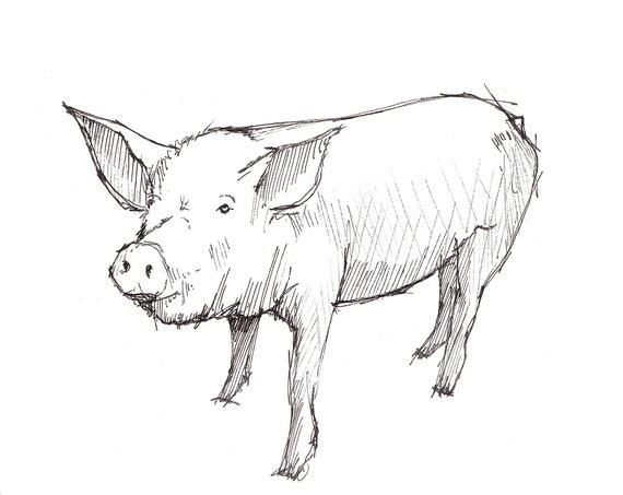 PIG SKETCH - Nature, Farm, Livestock, Animal, Art, Watercolor, Painting, Pen and Ink, Drawing, Sketchbook, Drawn There