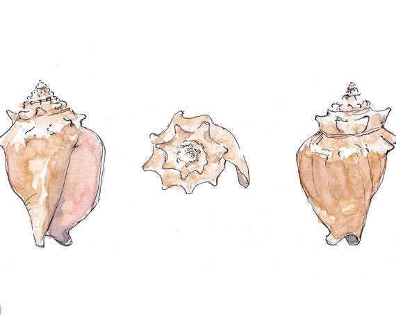 CONCH SHELLS - Seashell, Ocean, Beach, Marine, Nautical, Nautilus, Ink and Watercolor Painting, Drawing, Giclee Art Print, Drawn There