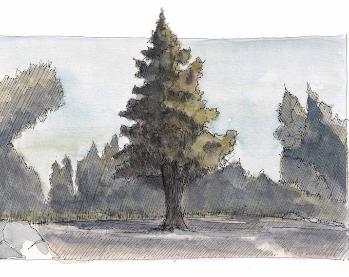 PINE TREE - PNW, Oregon, Forest, Nature, Trees, Ink and Watercolor Plein Air Landscape Painting, Drawing, Art, Sketchbook, Drawn There