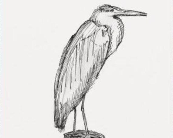 BLUE HERON - Bird, Chesapeake Bay, Nature, Animal, Pen and Ink, Drawing, Sketchbook, Art, Drawn There