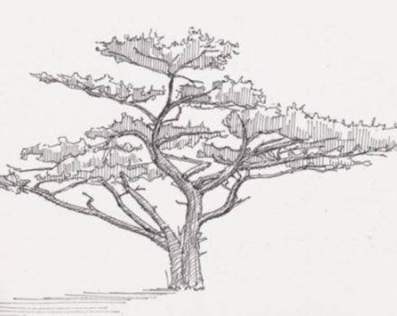 TREE on the LOST COAST Trail - California, Nature, Simple, Line Drawing, Pen and Ink, Sketchbook, Art Print, Drawn There