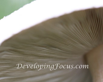 Customizable Instant Download White and Brown Mushroom Gills Alice in Wonderland Nature Photography Art