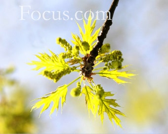Turning Over a New Leaf Nature Photograhy Card or Print, Religious Spiritual Christian Art, Customizable Instant Download