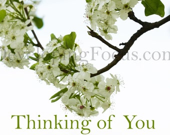 Green and White Pear Tree Branch Flower Photograhy Thinking of You Note or Greeting Card, Customizable Instant Download