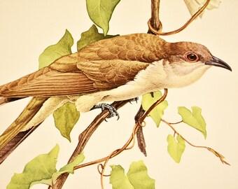 JF Landsdowne Bird Print