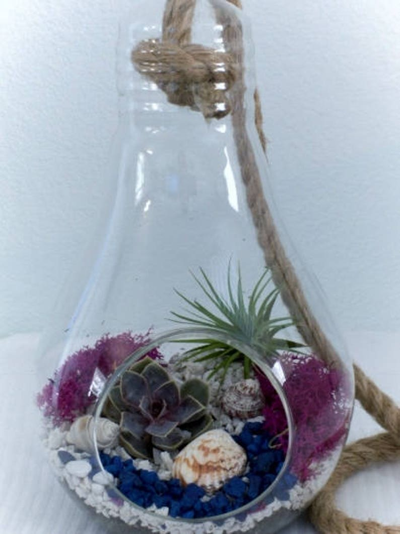 Glass Light Bulb Terrarium Kit Etsy