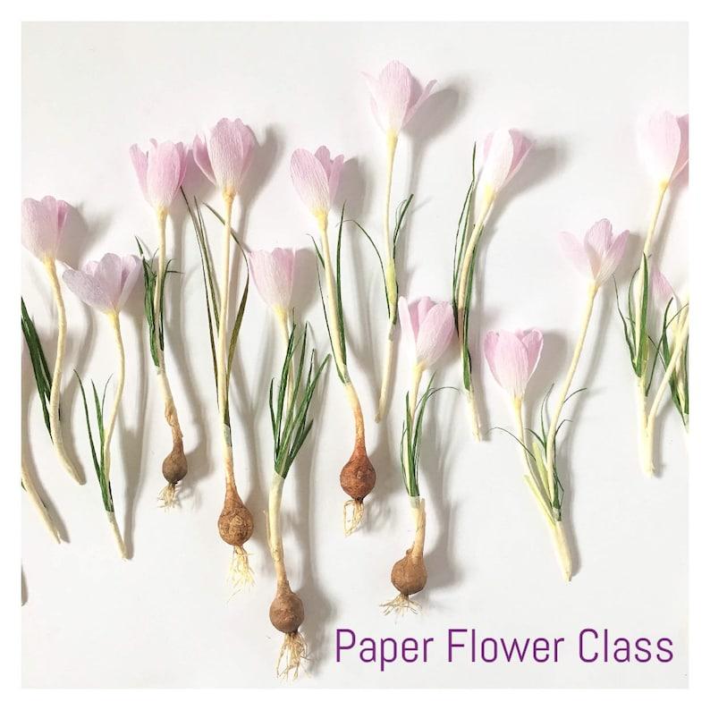 Paper Flower Class PDF Video Crocus Flower   Spring Bulb  773a56fd4