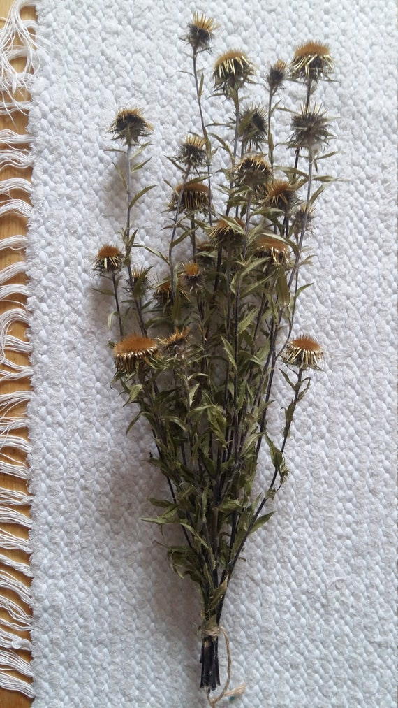 Seche Chardon Bouquet Fleurs Sechees Naturelles Tas Chardon Etsy