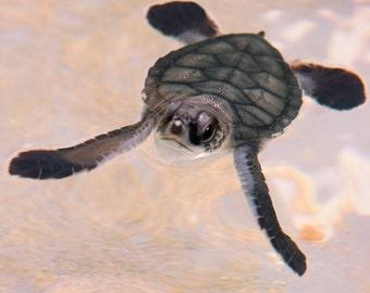 Baby Turtle Says Hello
