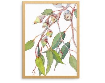 Eucalyptus print A5, 10x8, A4, 14x11, A3; Australian native plant; botanical watercolor wall art gift; Silver Princess Eucalyptus