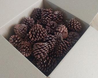 Bulk 3 inch pine cones (box of 75)