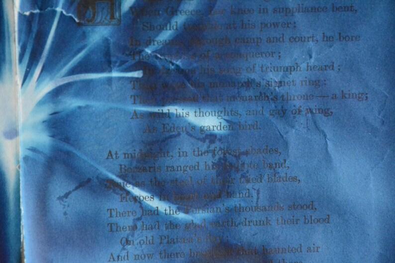 Original Cyanotype on Antique Book Pages Bozzaris Bloom