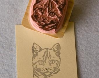 Ref. 90. Tabby cat / Chat tigré