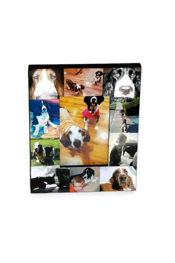 Pet Memorial Collage Picture Frame In Loving Memory Pet Frame | Etsy
