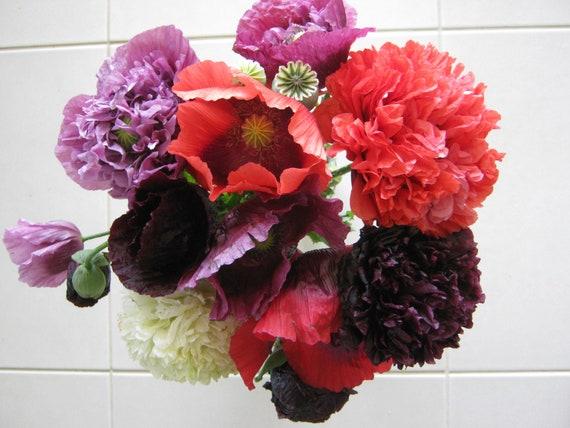 Poppy Flower Seeds Papaver Somniferum Black Red White Pink Etsy