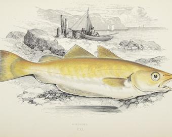 Grouper datiert allasDing-Einem älteren Bachelor