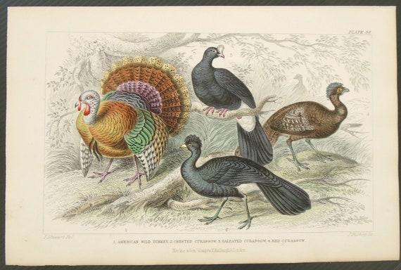 1850 Original Antique  Hand color print of The Kite Natural history animal  print Nature print Chromolithograph