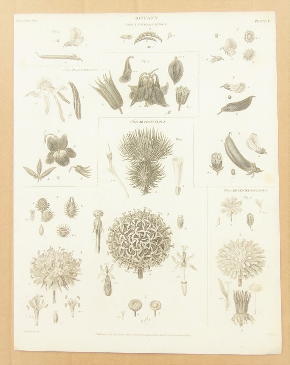Antique Print Botanical 1920s Engraved book page  illustration Plants seeds leaves roots