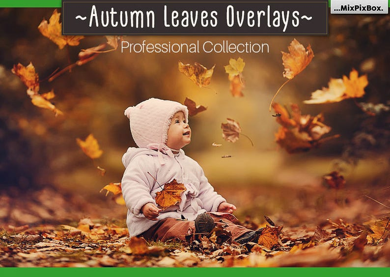 Autumn Leaves Overlays PNG Falling Leaves  Fall leaves image 1