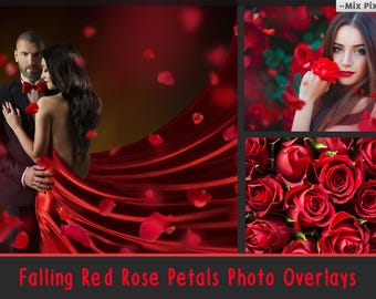 Falling  Rose Petals Photo Overlays , Rose Petals, Red Rose Petals PNG, Petals Photoshop Overlays, fluttering petals, Transparent background