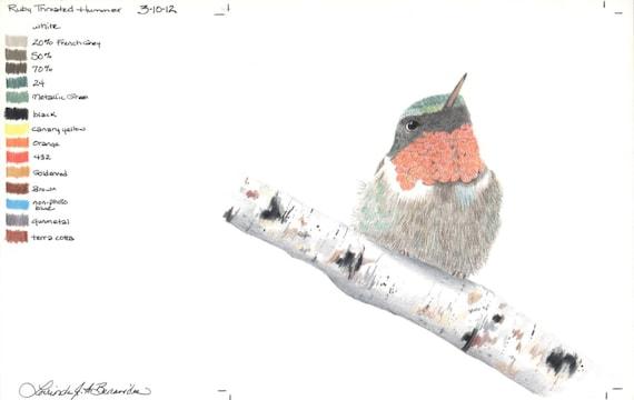 Colibrí de garganta rubí foto realista de colores lápices | Etsy