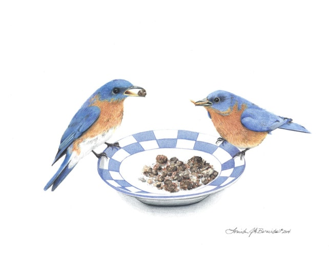 Dos Bluebirds coloreado lápices arte Ilustración dibujo | Etsy