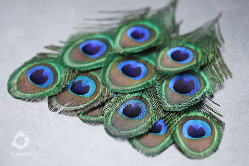 7-10 cm FREE SHIPPING available 4-5\u201d Loose feathers Natural colourful Iridescent Green and gold Peacock Plumage Peacock feathers