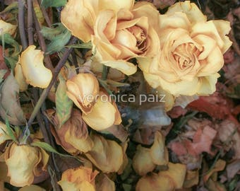 Yellow Roses, Fine Art Photography on Canvas, Floral Wall Art, Romantic Shabby Chic, Nature Art